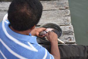 Hernando entschuppt die Fische