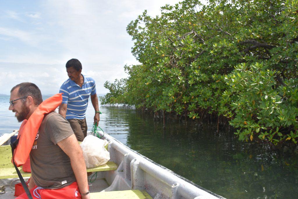 Zu kleine Sardinen beim Fischen in Bocas del Toro