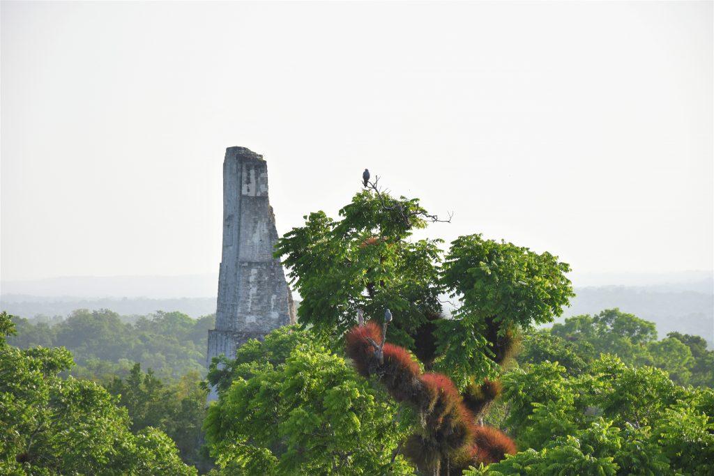 Ausblick auf weitere Tempel