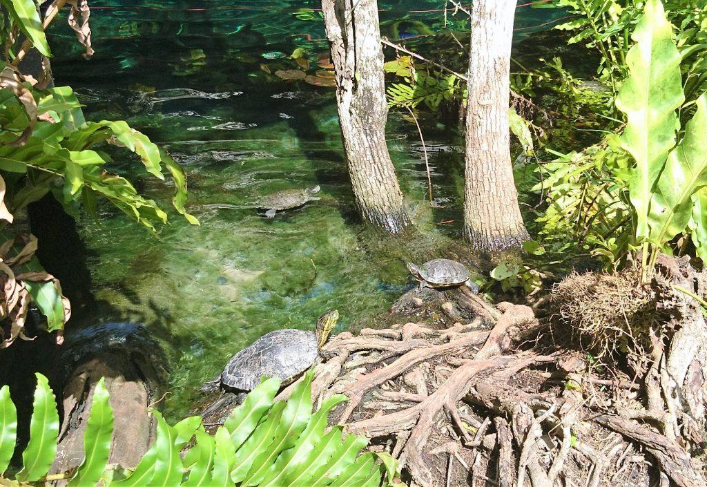 turtle zone gran cenote tulum