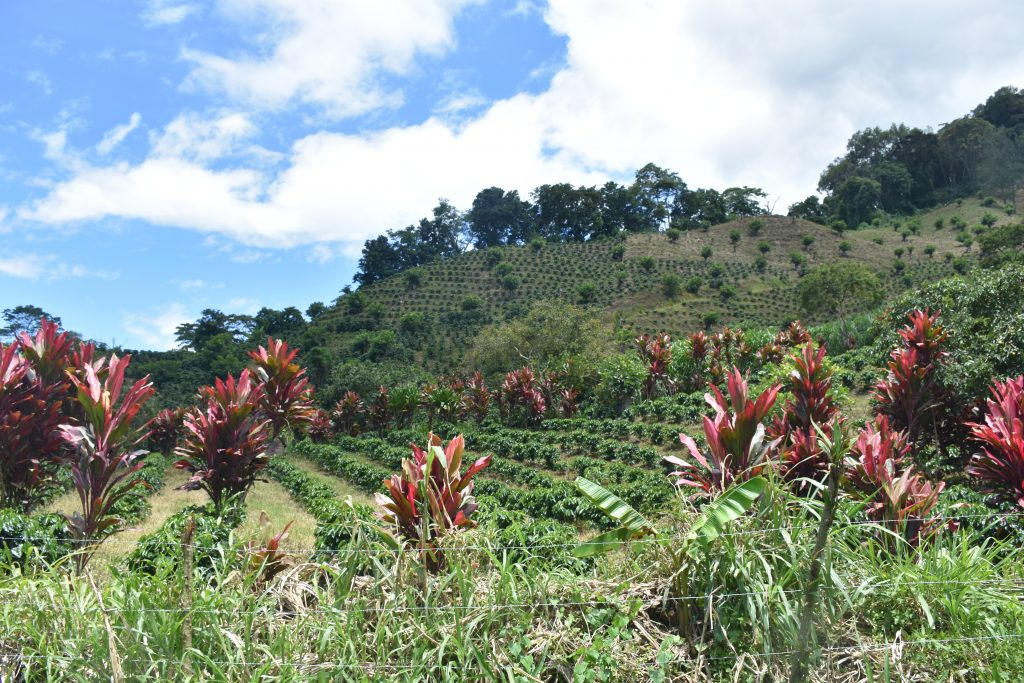 Kaffeeplantagen Orosi