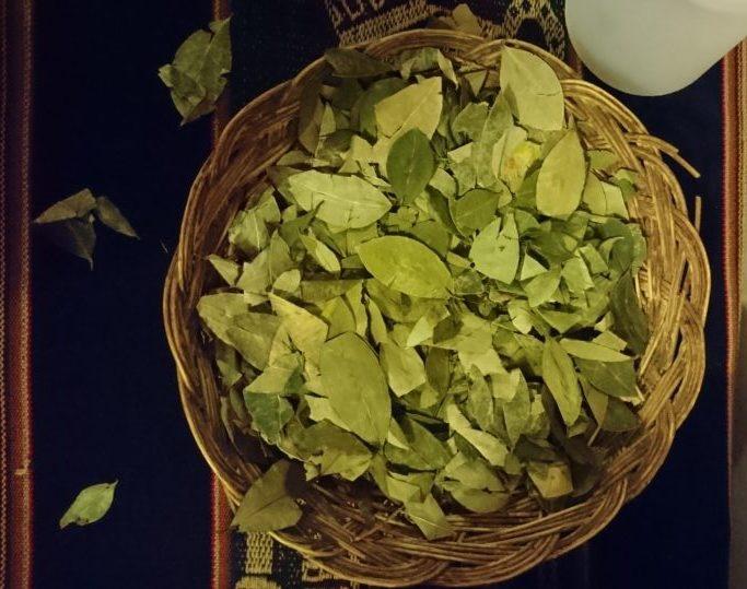 Coca Blätter