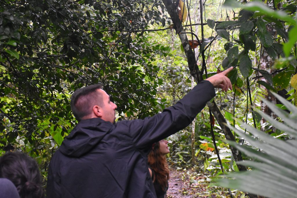 Affen entdecken im Parque Nacional Manu