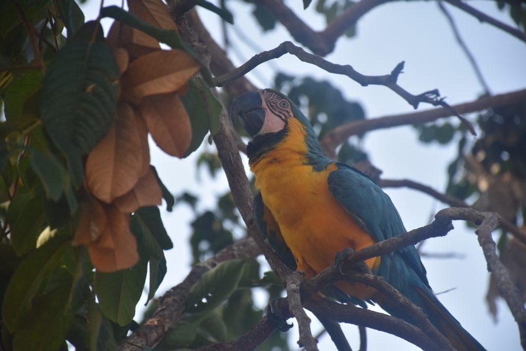 Amazonas Tour Papagei