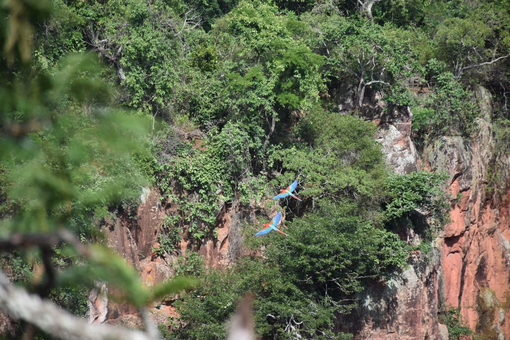 Ara fliegt durch Doline