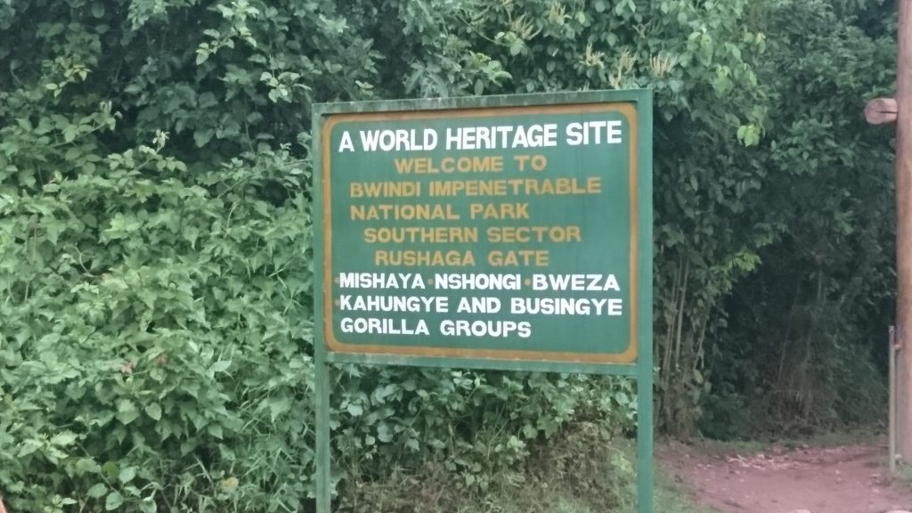 Gorilla Trekking Rushaga Area