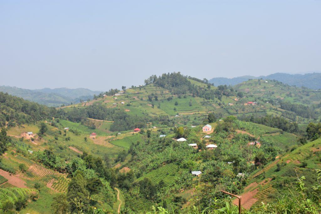 Hang Gorilla Trekking Uganda