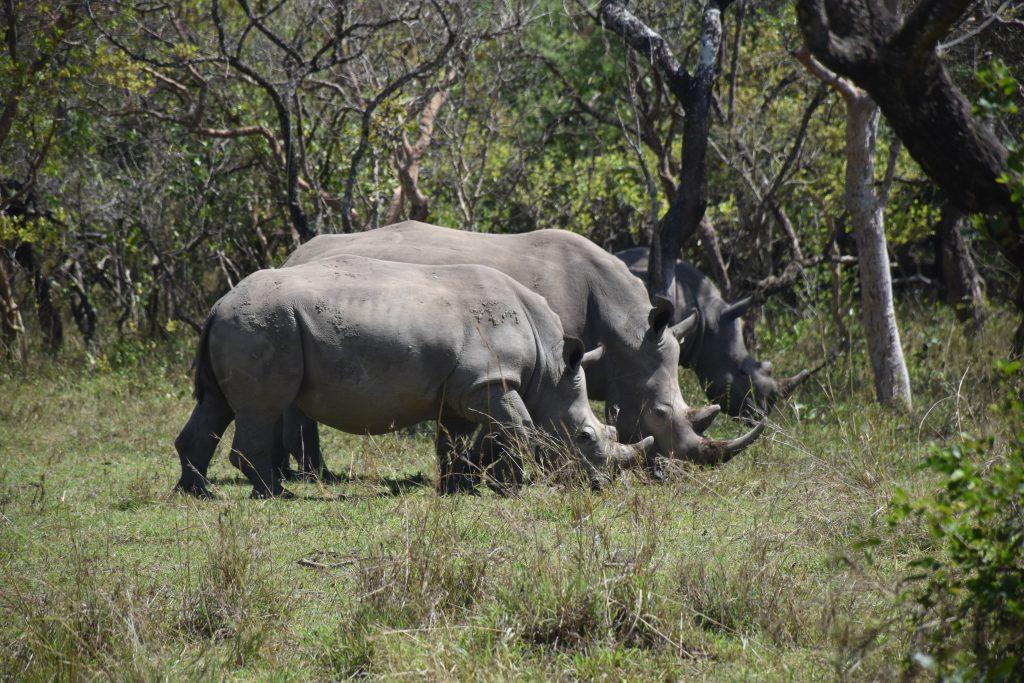 rhino dreierpack