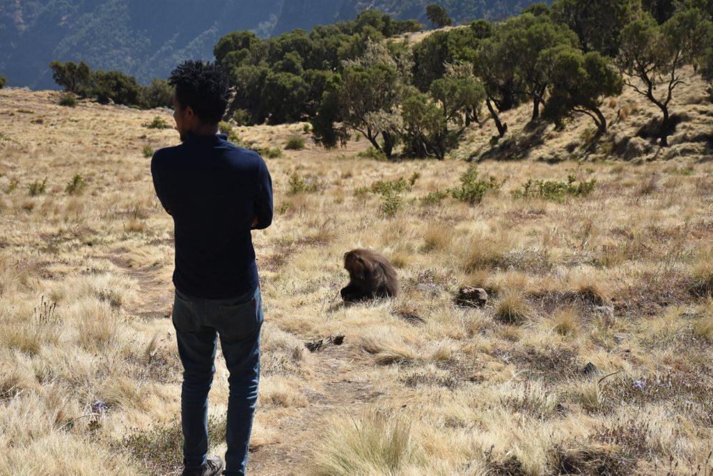 Guide sieht ersten Affen