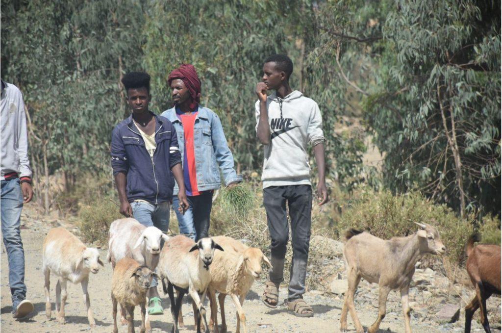 Vieh zum Markt