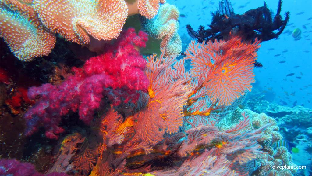 Rainbow Reef Taveuni Sehenswürdigkeiten