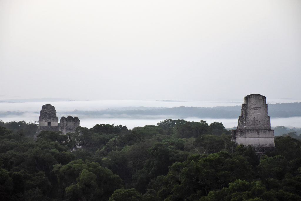 Tikal im Nebel