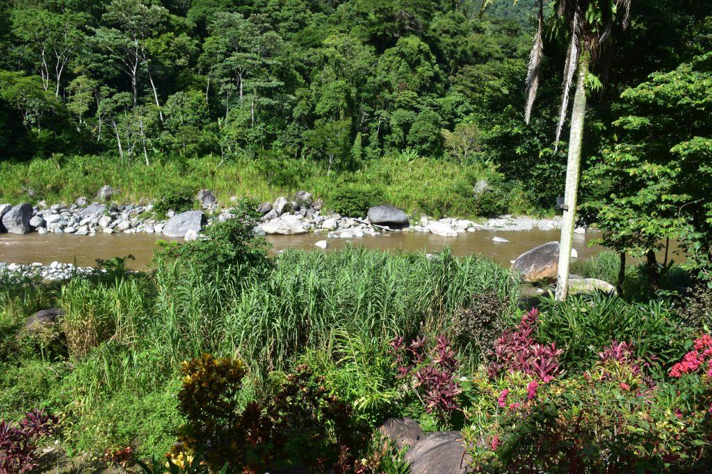 Blick auf den Fluss Pico Bonito