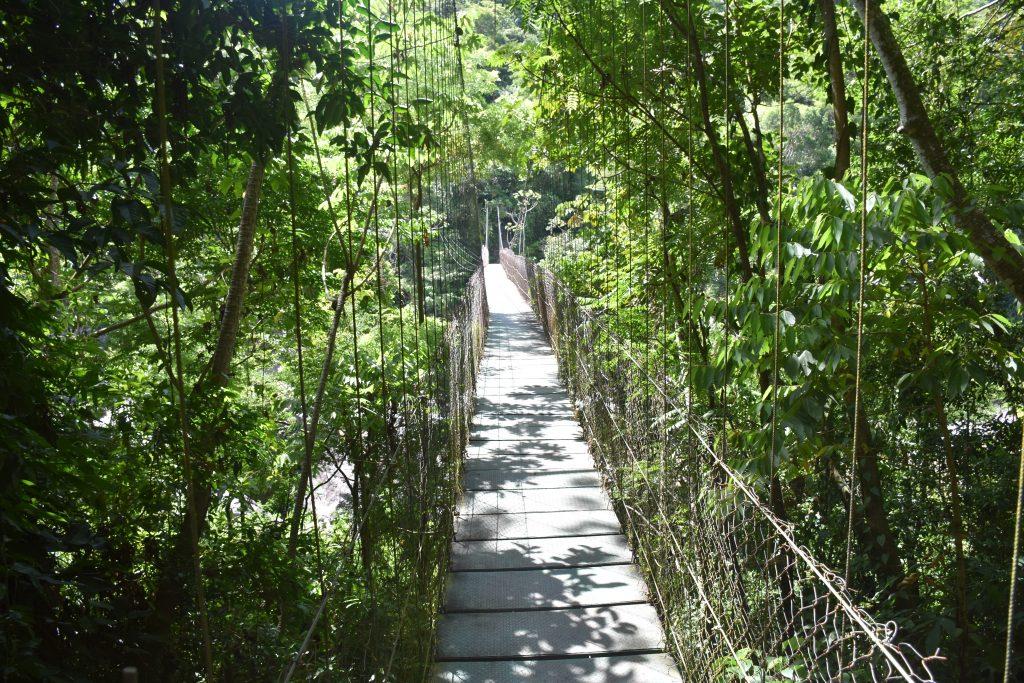 Hängebrücke Pico Bonito