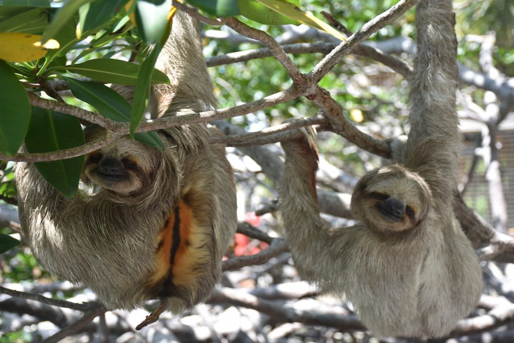 happy sloth couple