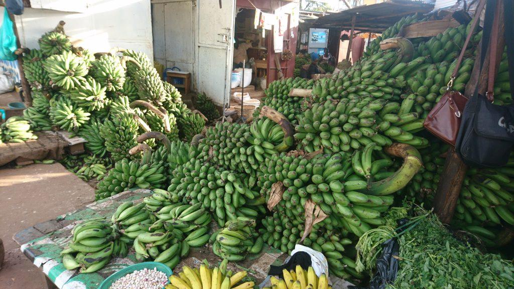 Volunteering in Uganda Kochbananen
