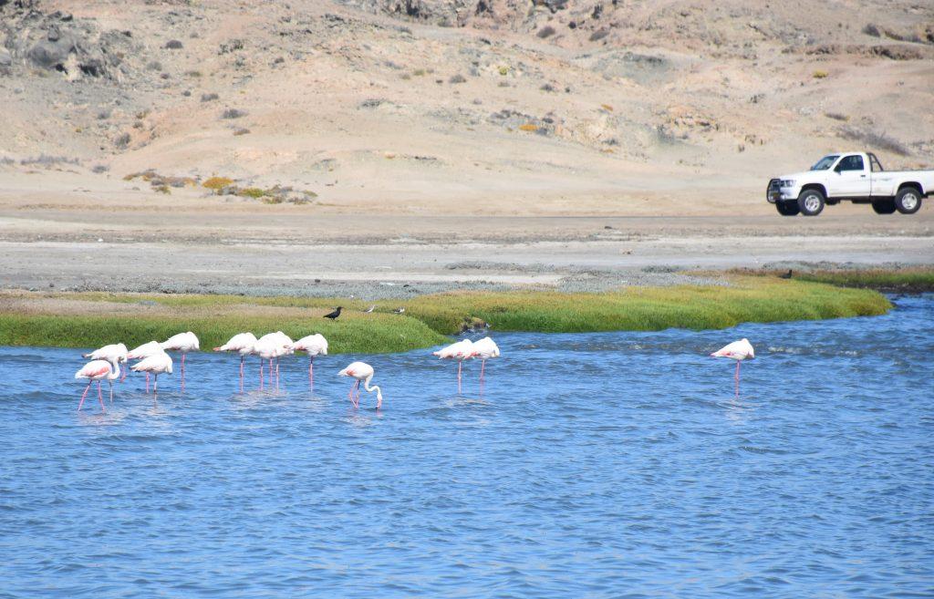 Flamingos Lüderitz