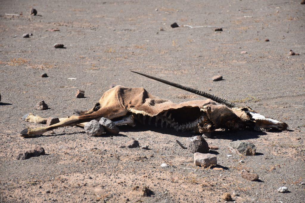 tote Oryx Hardap